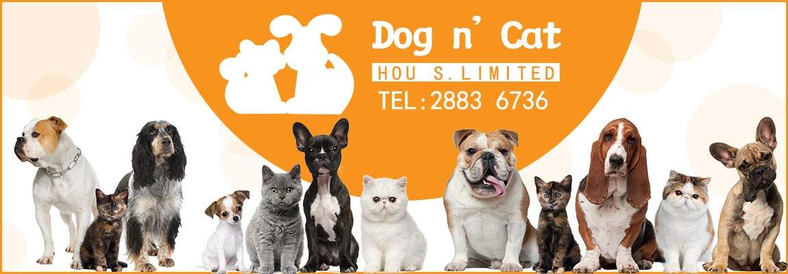 DOG-N-CAT-top-banner-6-1432694762