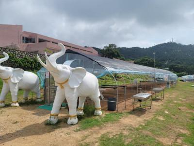 澳門都市農場 Macau Urban Farm